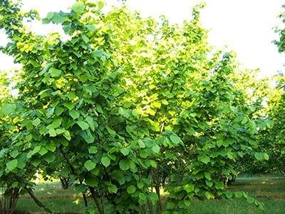L'azienda agricola Scoiattolo Rosso utilizza solo trattamenti a base di rame e zolfo.