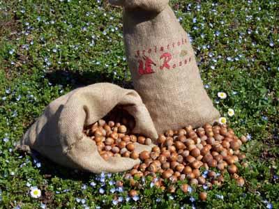 Vendita nocciole Piemonte igp azienda agricola scoiattolo rosso